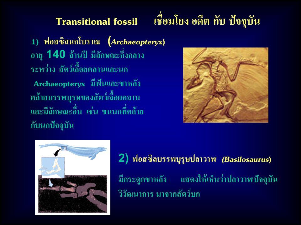Transitional fossil เชื่อมโยง อดีต กับ ปัจจุบัน