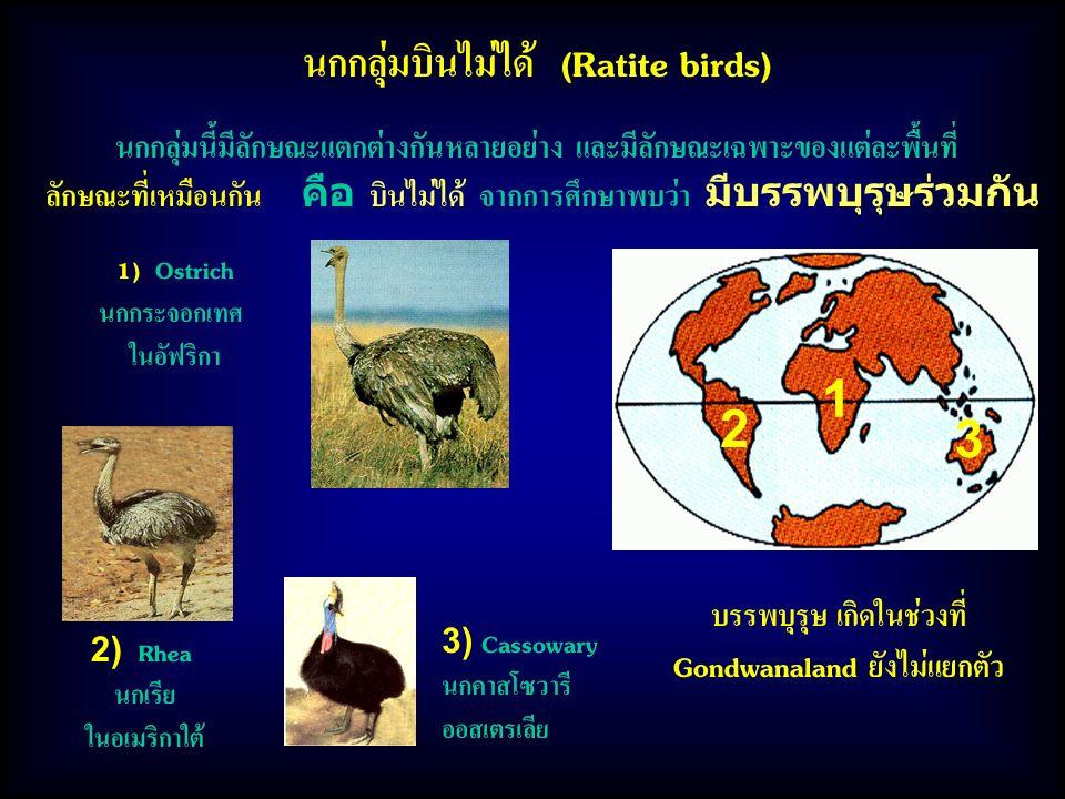 นกกลุ่มบินไม่ได้ (Ratite birds) 1 2 3