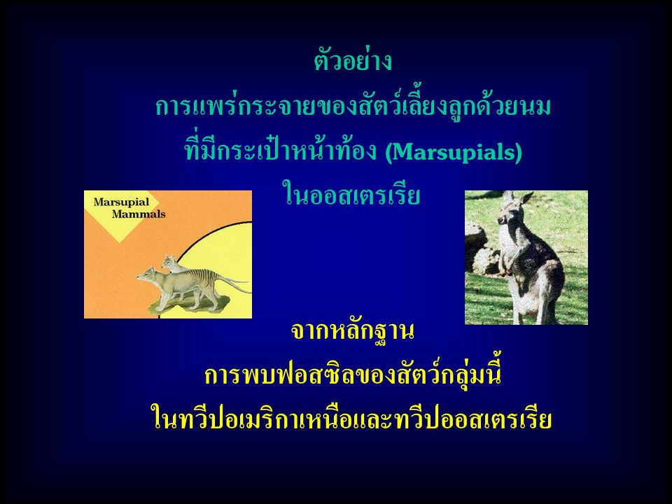 การแพร่กระจายของสัตว์เลี้ยงลูกด้วยนม ที่มีกระเป๋าหน้าท้อง (Marsupials)