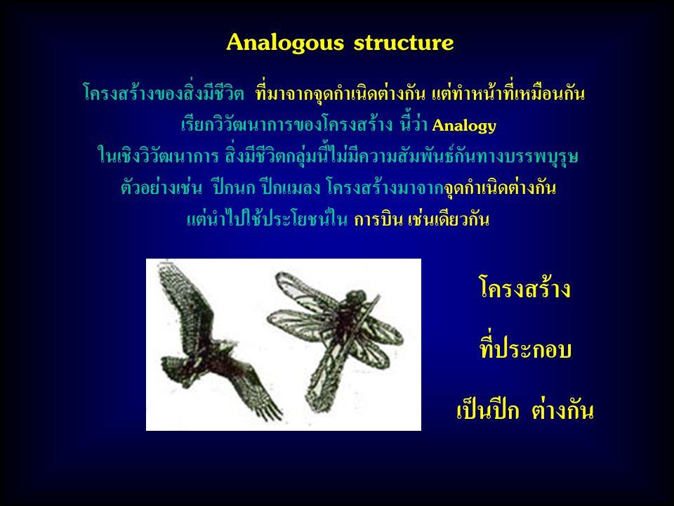 Analogous structure โครงสร้าง ที่ประกอบ เป็นปีก ต่างกัน