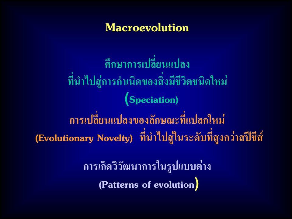 Macroevolution ศึกษาการเปลี่ยนแปลง