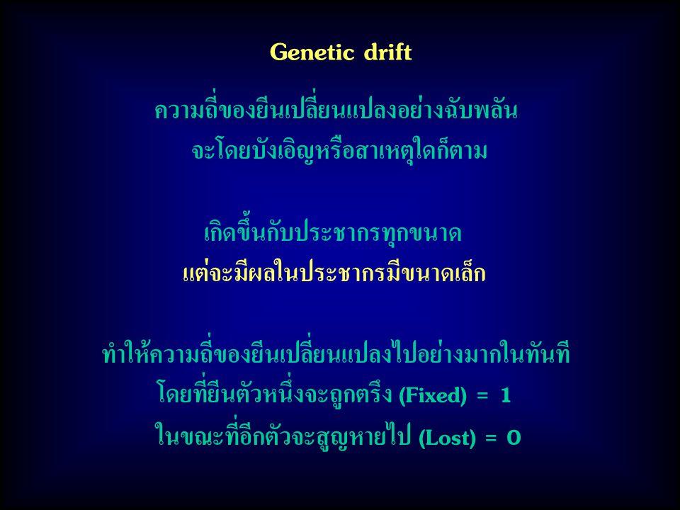 Genetic drift ความถี่ของยีนเปลี่ยนแปลงอย่างฉับพลัน