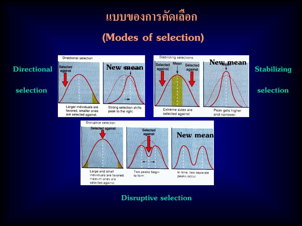 แบบของการคัดเลือก (Modes of selection) New mean Directional selection