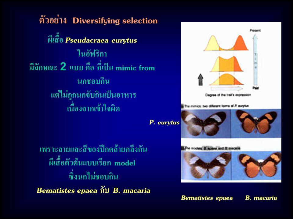 ตัวอย่าง Diversifying selection