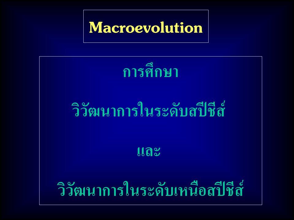 วิวัฒนาการในระดับสปีชีส์ วิวัฒนาการในระดับเหนือสปีชีส์