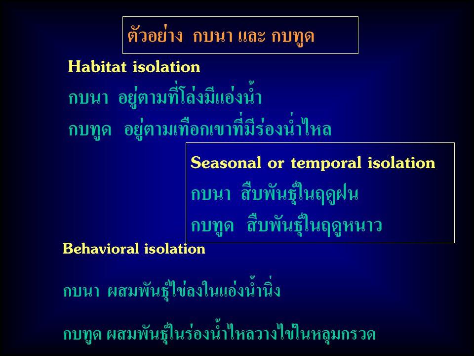 ตัวอย่าง กบนา และ กบทูด Habitat isolation กบนา อยู่ตามที่โล่งมีแอ่งน้ำ