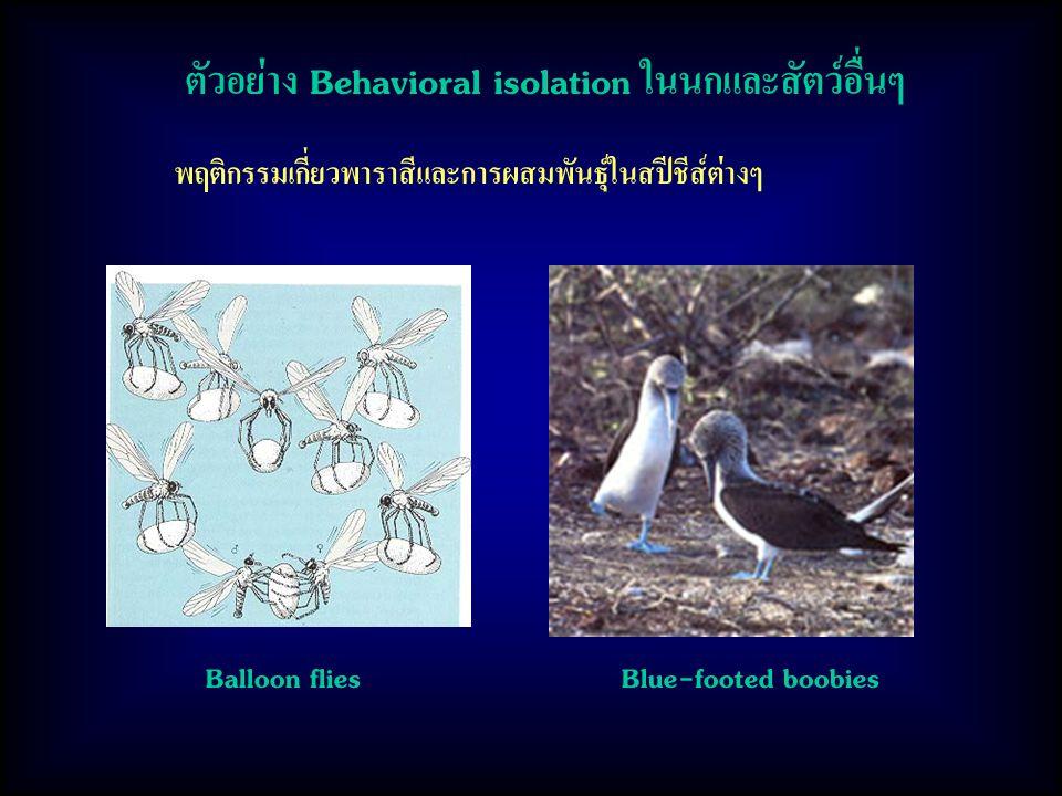ตัวอย่าง Behavioral isolation ในนกและสัตว์อื่นๆ
