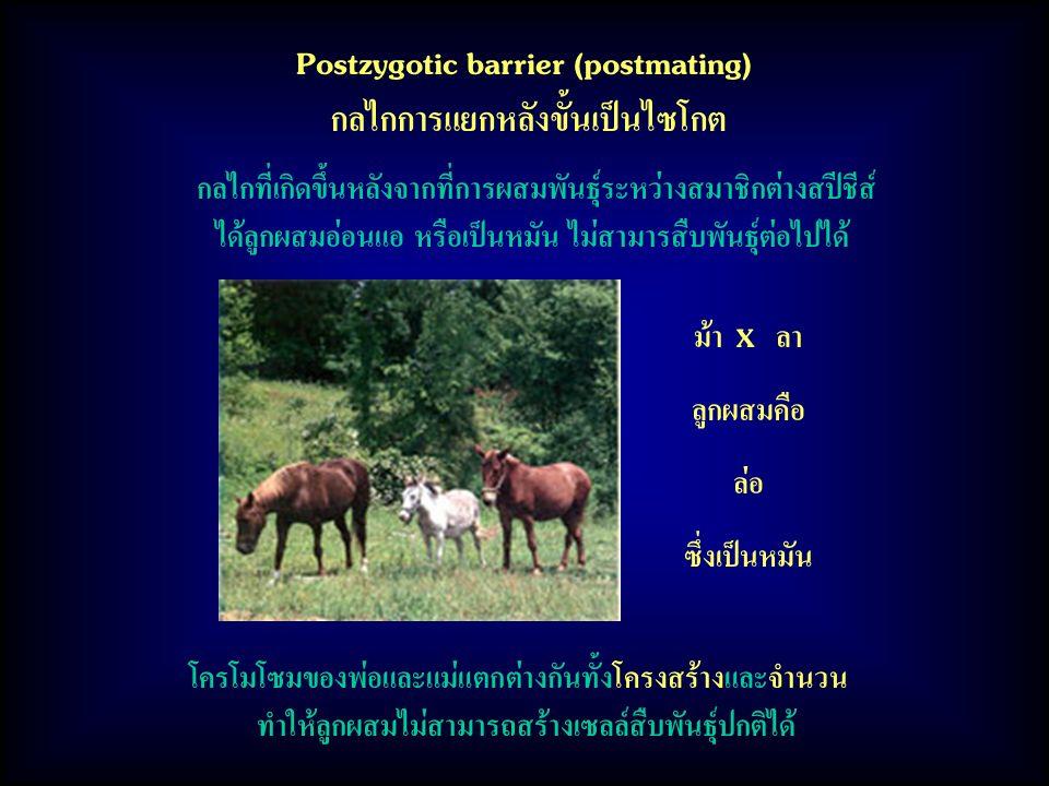 Postzygotic barrier (postmating) กลไกการแยกหลังขั้นเป็นไซโกต