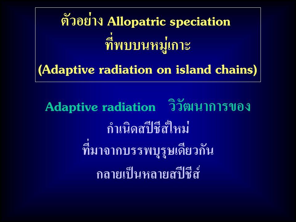 ตัวอย่าง Allopatric speciation ที่พบบนหมู่เกาะ