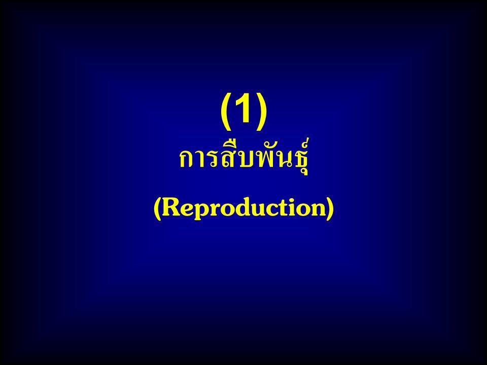 (1) การสืบพันธุ์ (Reproduction)