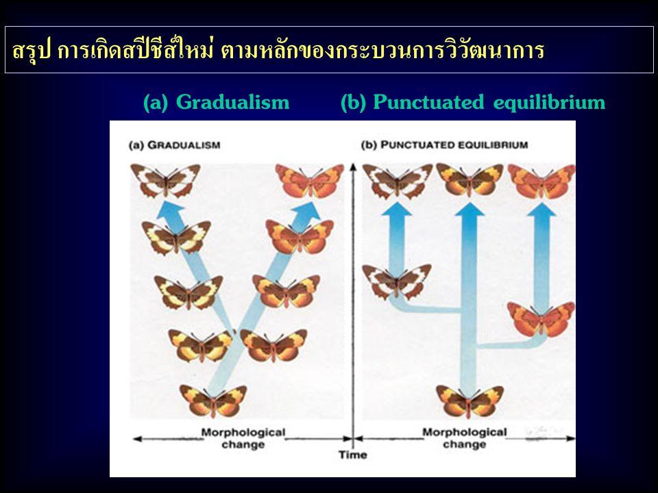 สรุป การเกิดสปีชีส์ใหม่ ตามหลักของกระบวนการวิวัฒนาการ