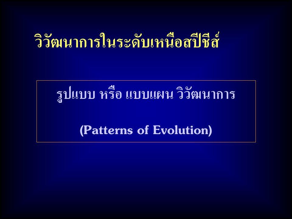 รูปแบบ หรือ แบบแผน วิวัฒนาการ (Patterns of Evolution)