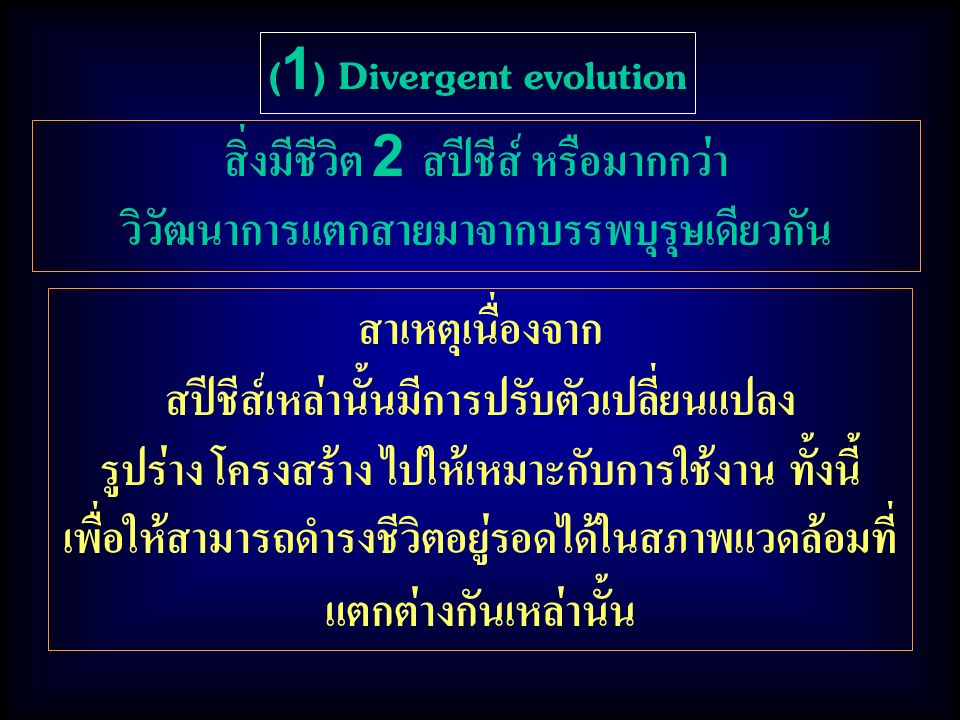 (1) Divergent evolution