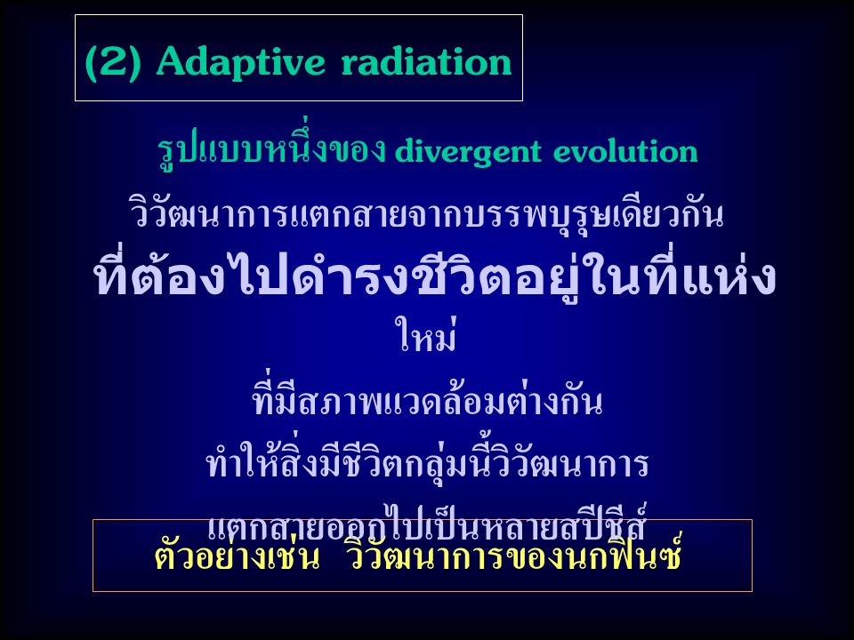 (2) Adaptive radiation รูปแบบหนึ่งของ divergent evolution