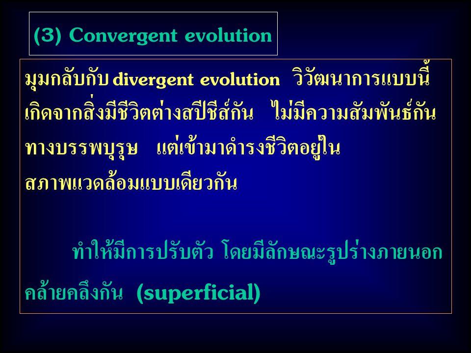 (3) Convergent evolution