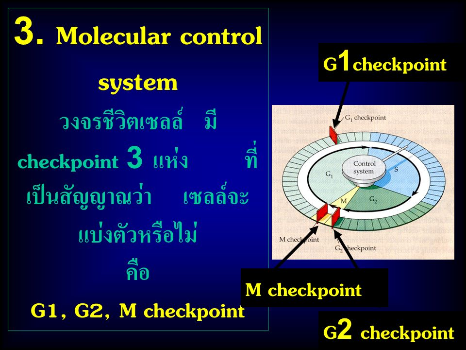 3. Molecular control system