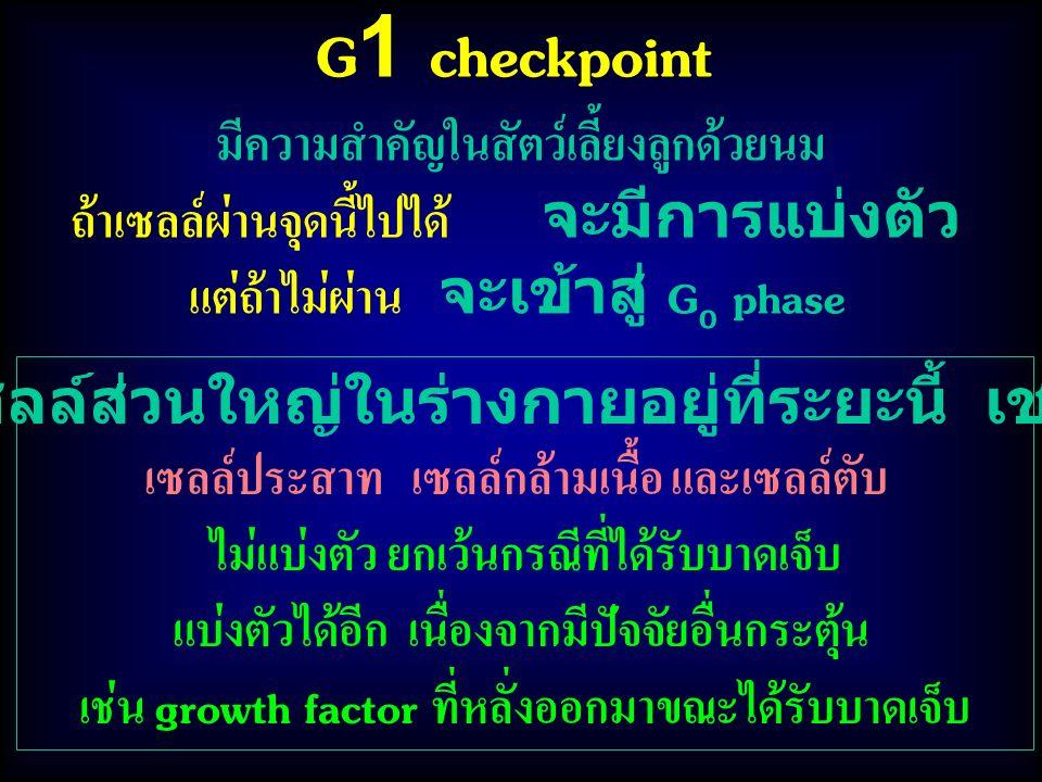 G1 checkpoint มีความสำคัญในสัตว์เลี้ยงลูกด้วยนม