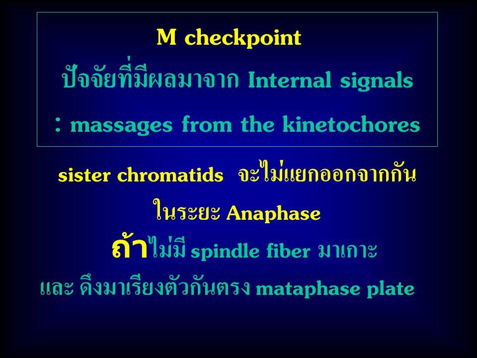 ปัจจัยที่มีผลมาจาก Internal signals : massages from the kinetochores