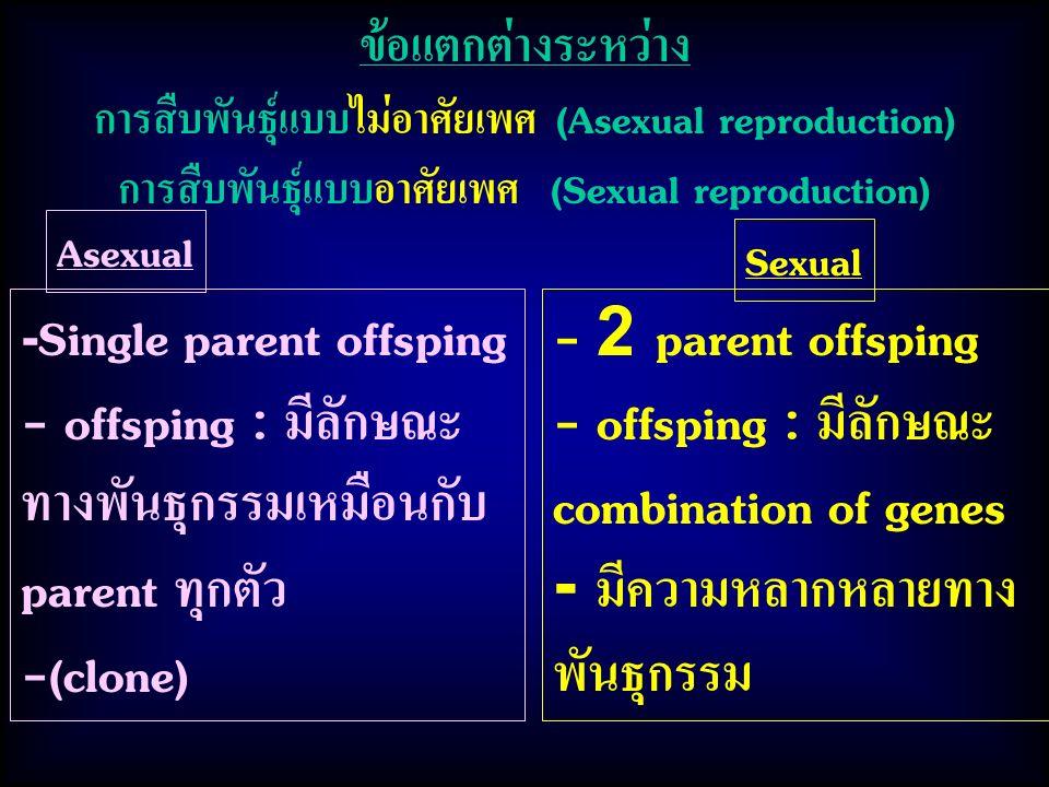 ทางพันธุกรรมเหมือนกับ parent ทุกตัว -(clone) - 2 parent offsping