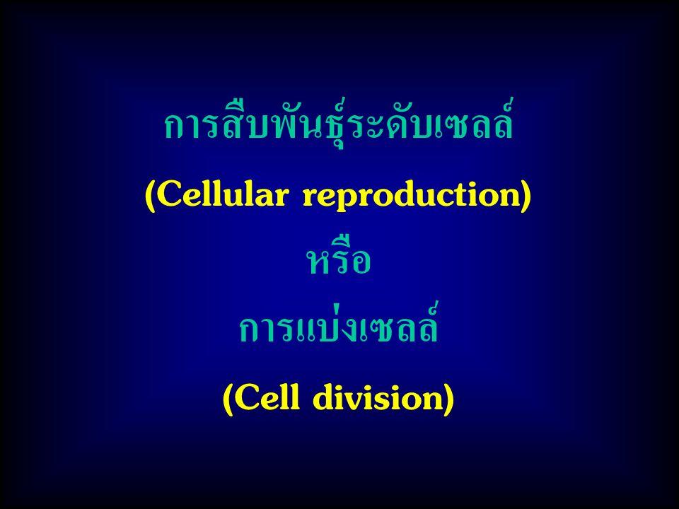 การสืบพันธุ์ระดับเซลล์ (Cellular reproduction)