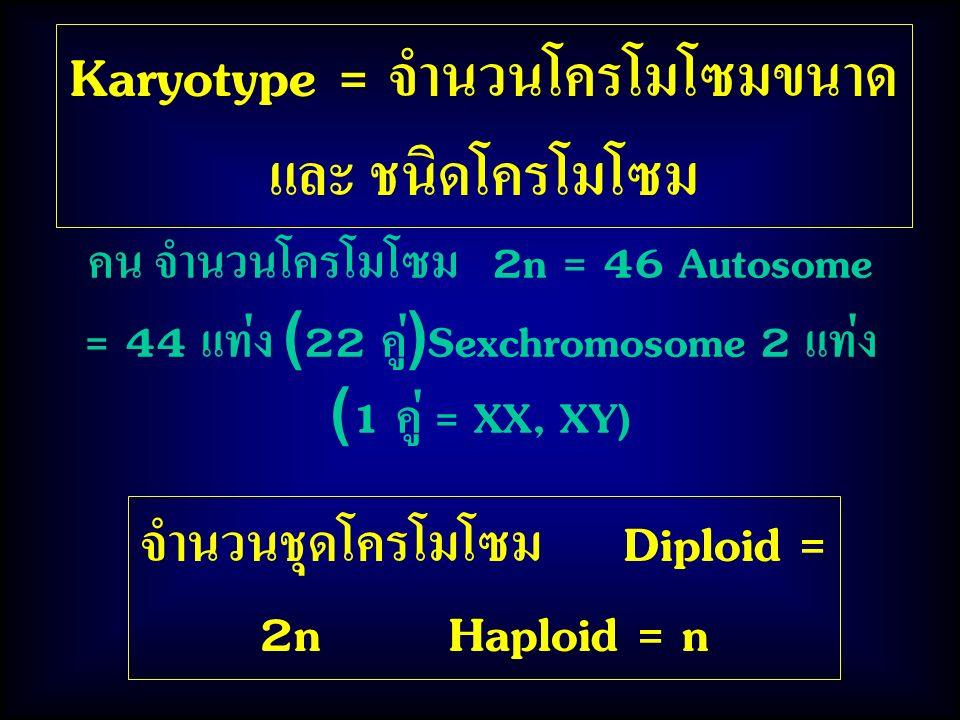 Karyotype = จำนวนโครโมโซมขนาด และ ชนิดโครโมโซม