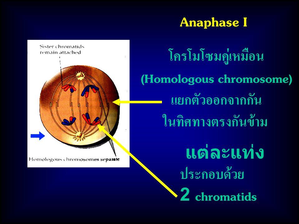 (Homologous chromosome)