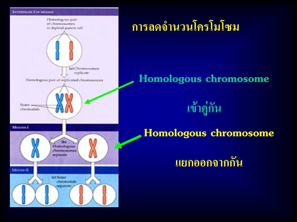 Homologous chromosome Homologous chromosome