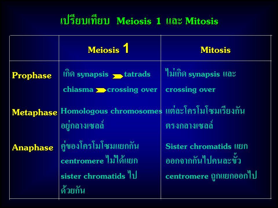 เปรียบเทียบ Meiosis 1 และ Mitosis