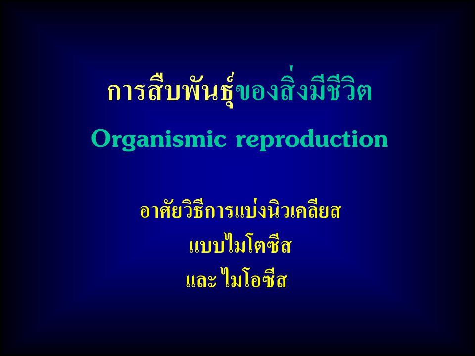 การสืบพันธุ์ของสิ่งมีชีวิต Organismic reproduction
