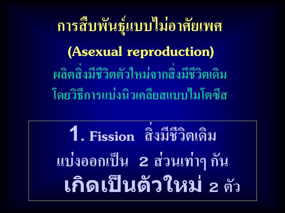 การสืบพันธุ์แบบไม่อาศัยเพศ (Asexual reproduction)