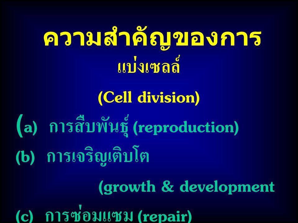 ความสำคัญของการแบ่งเซลล์