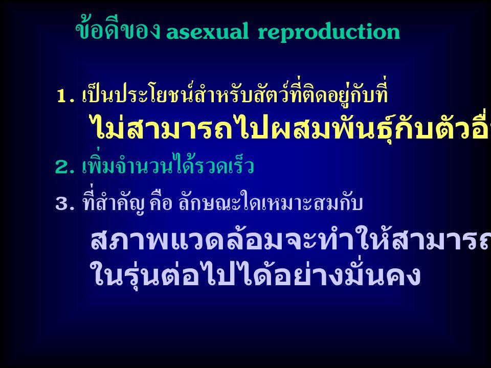 ข้อดีของ asexual reproduction