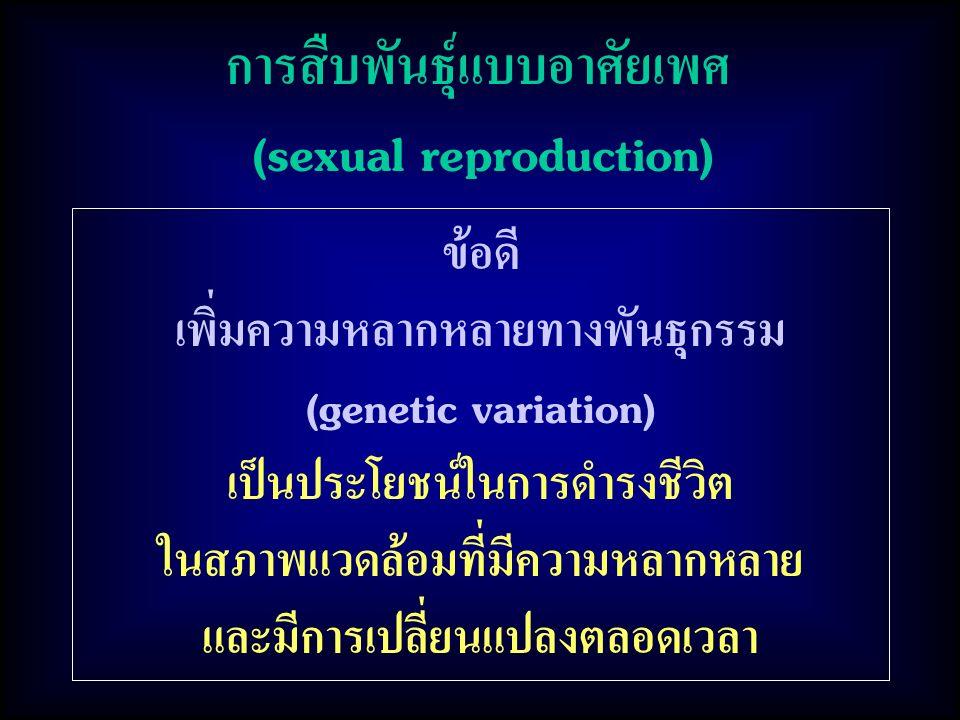 การสืบพันธุ์แบบอาศัยเพศ (sexual reproduction)