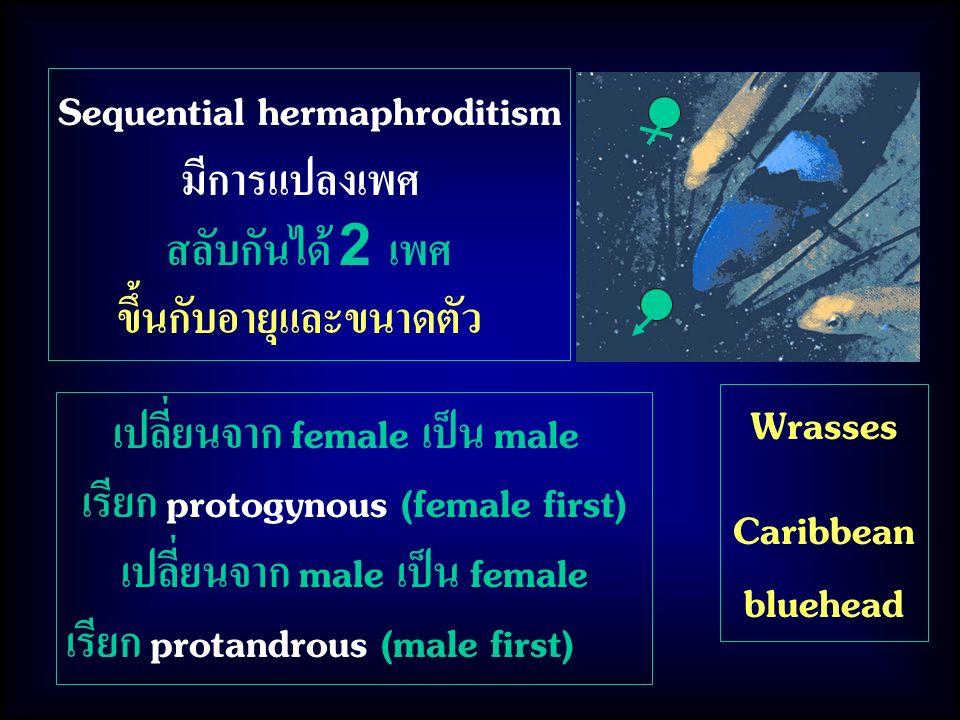 Sequential hermaphroditism มีการแปลงเพศ สลับกันได้ 2 เพศ