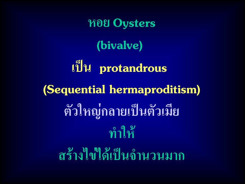 (Sequential hermaproditism) ตัวใหญ่กลายเป็นตัวเมีย ทำให้