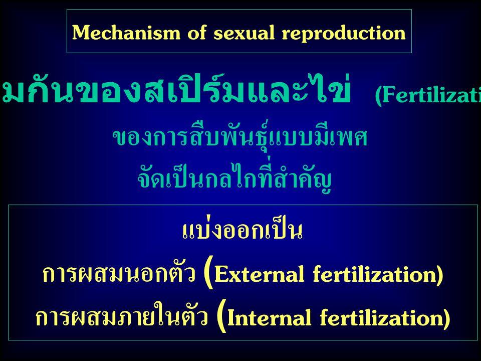 รวมกันของสเปิร์มและไข่ (Fertilization) ของการสืบพันธุ์แบบมีเพศ