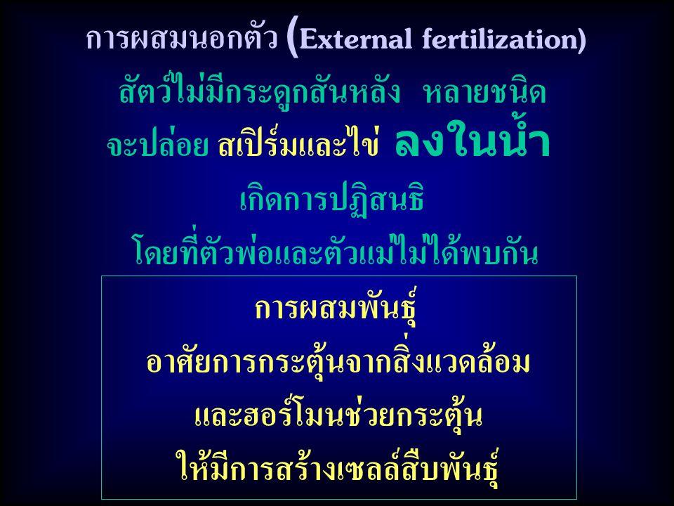 การผสมนอกตัว (External fertilization) สัตว์ไม่มีกระดูกสันหลัง หลายชนิด