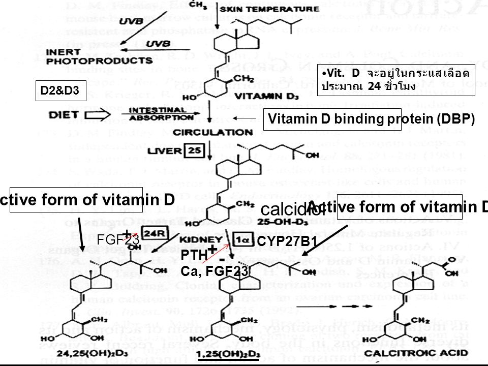Inactive form of vitamin D Active form of vitamin D