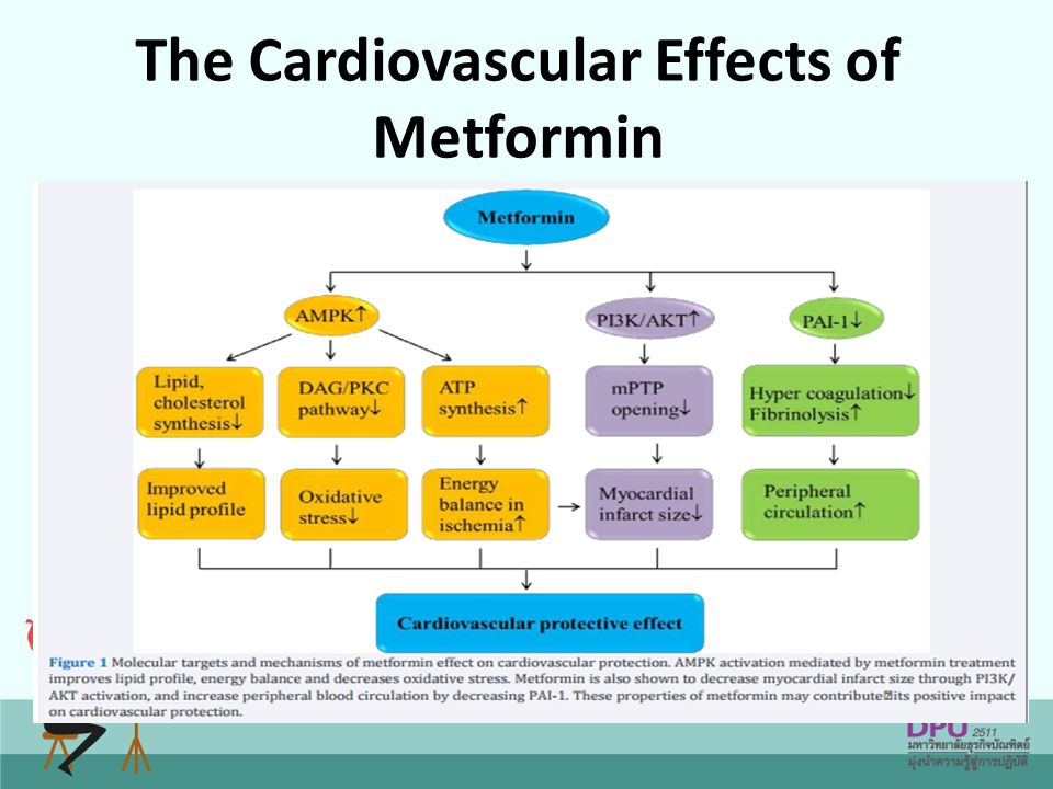 The Cardiovascular Effects of Metformin
