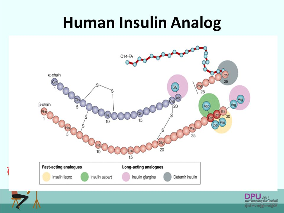 Human Insulin Analog