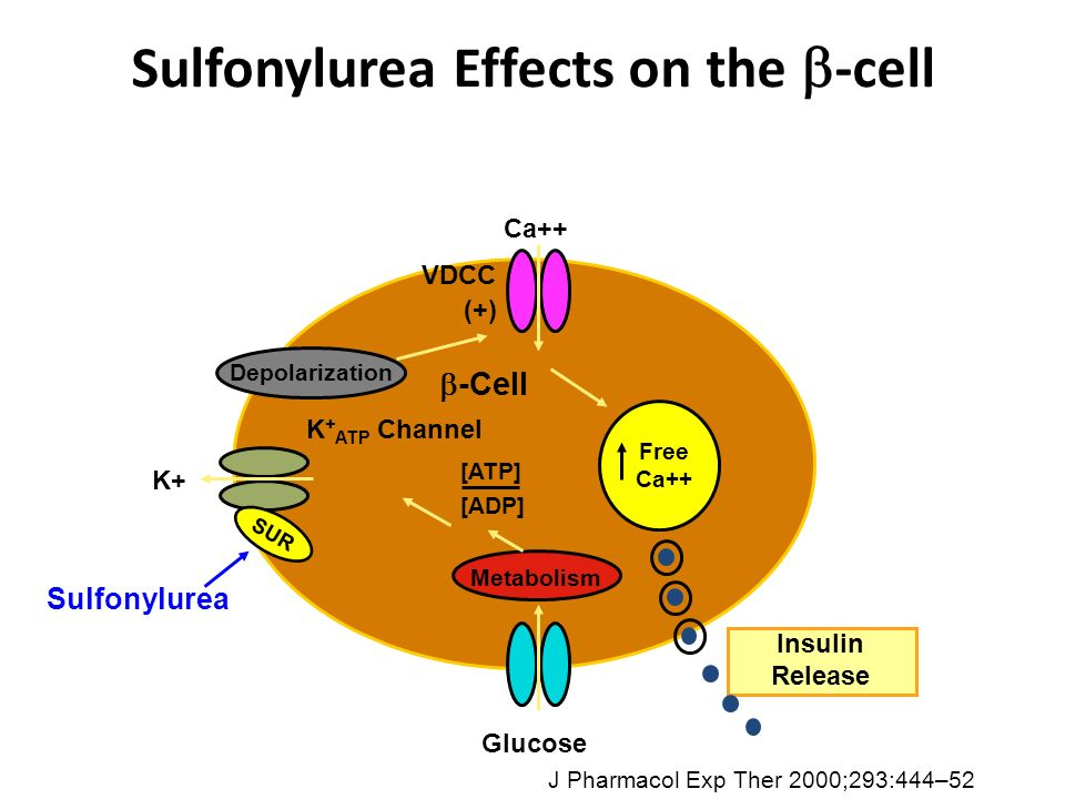 Sulfonylurea Effects on the -cell