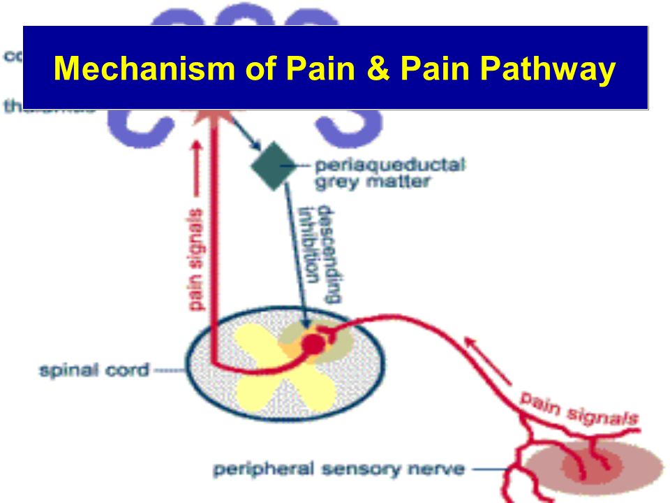 Mechanism of Pain & Pain Pathway