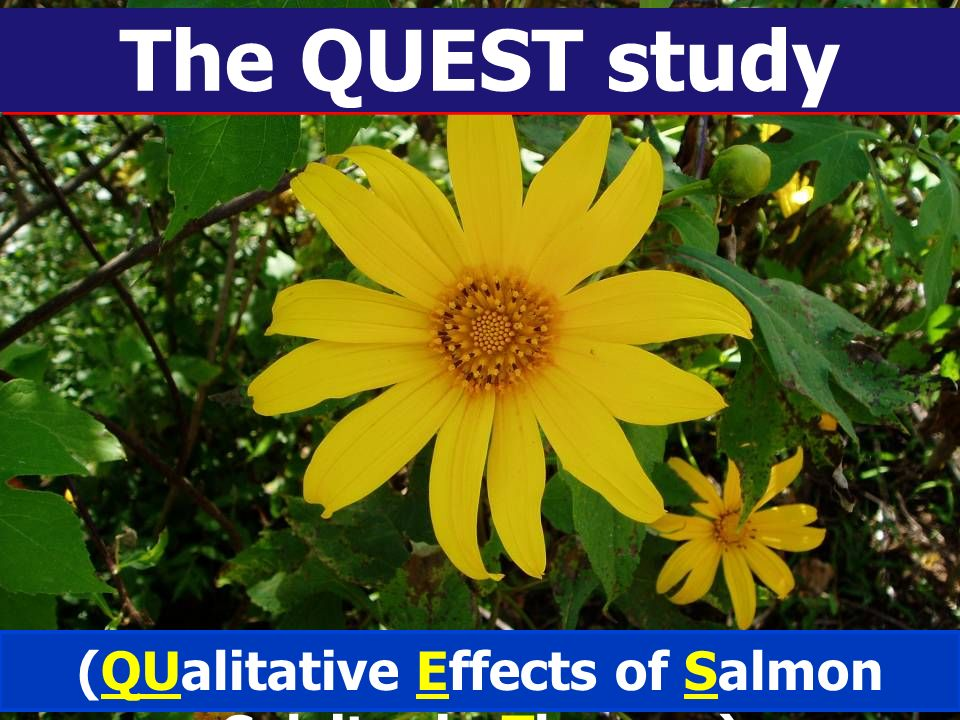 (QUalitative Effects of Salmon Calcitonin Therapy)
