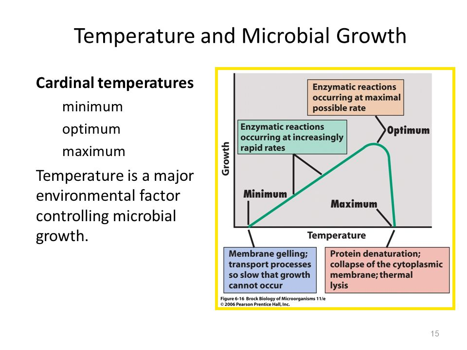Temperature and Microbial Growth