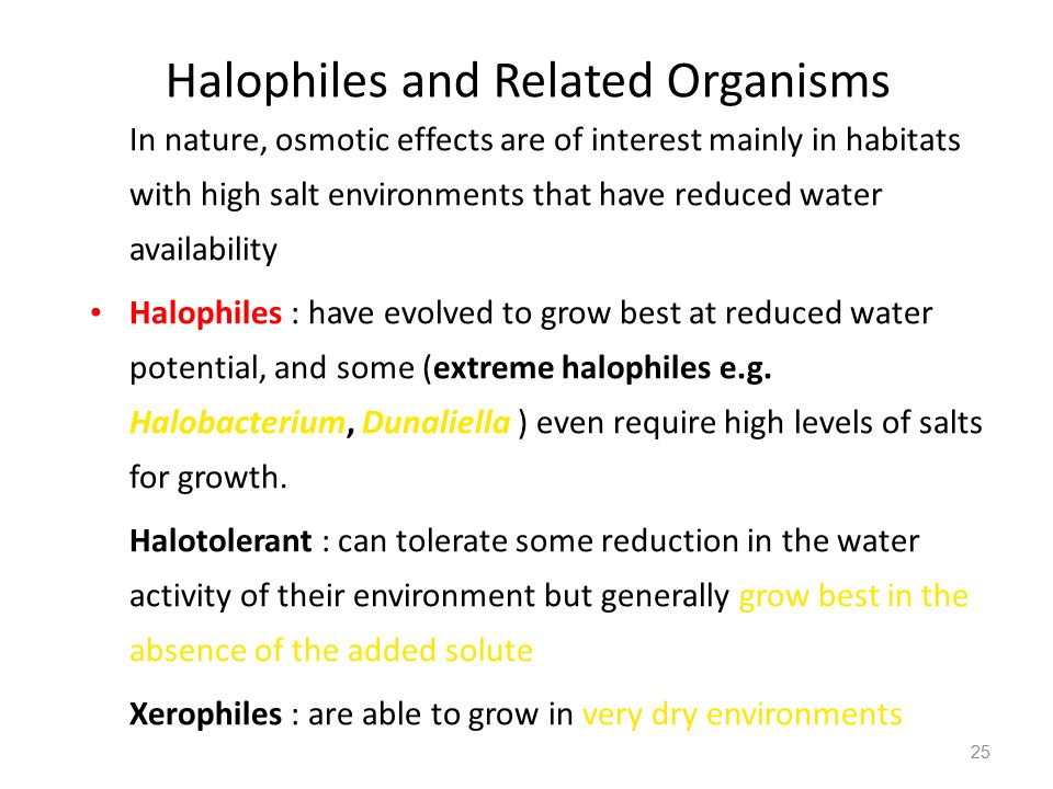 Halophiles and Related Organisms