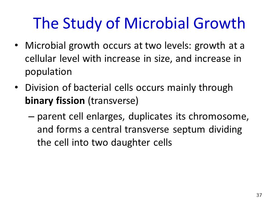 The Study of Microbial Growth
