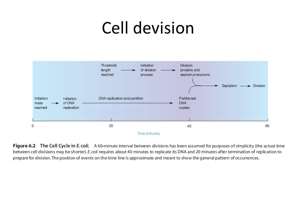 Cell devision