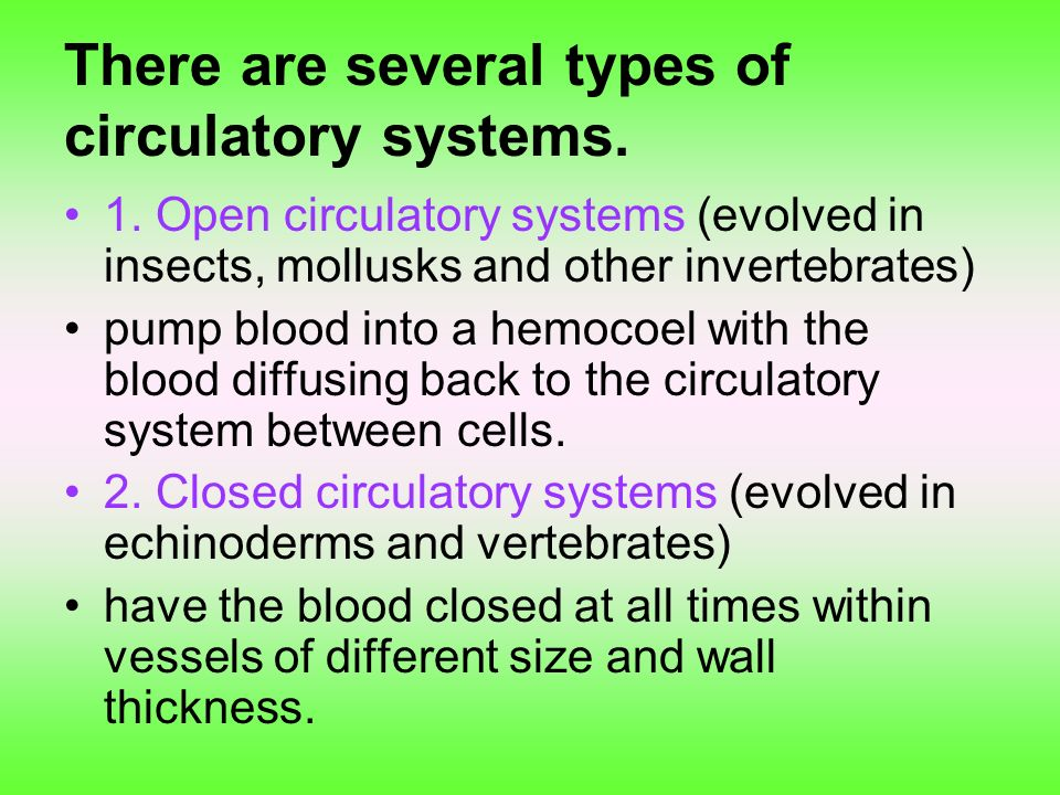 There are several types of circulatory systems.
