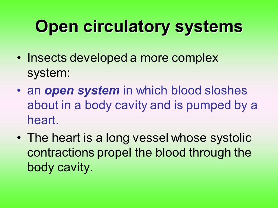 Open circulatory systems
