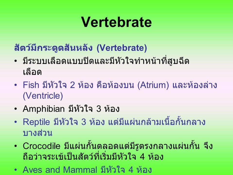 Vertebrate สัตว์มีกระดูดสันหลัง (Vertebrate)